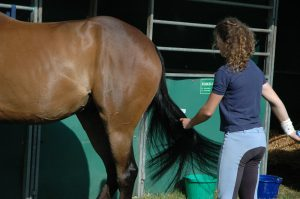 What are the Benefits of Horse Riding?